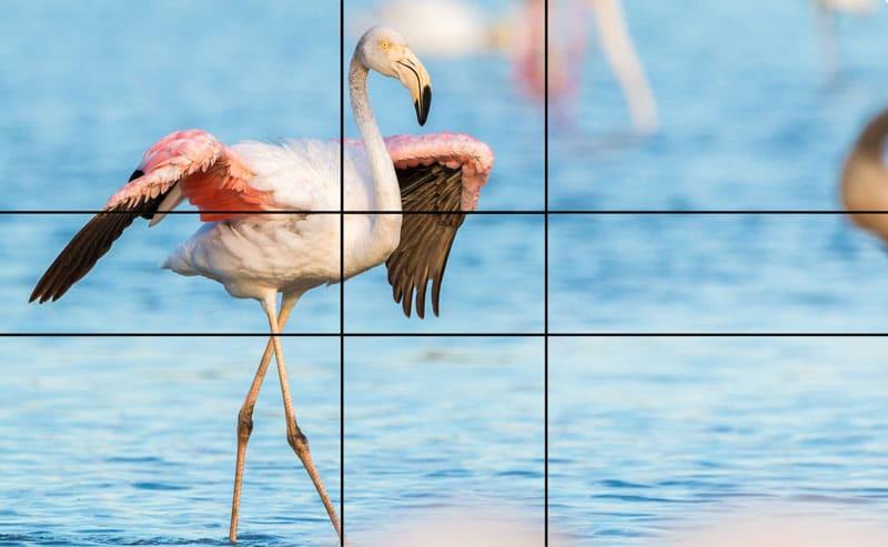 flamingo goldener schnitt in der natur